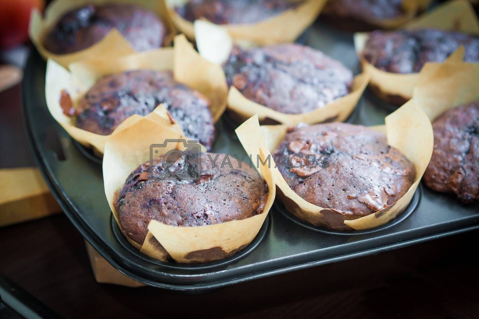 Chocolate muffins with blueberry on cooking pan by PixAchi