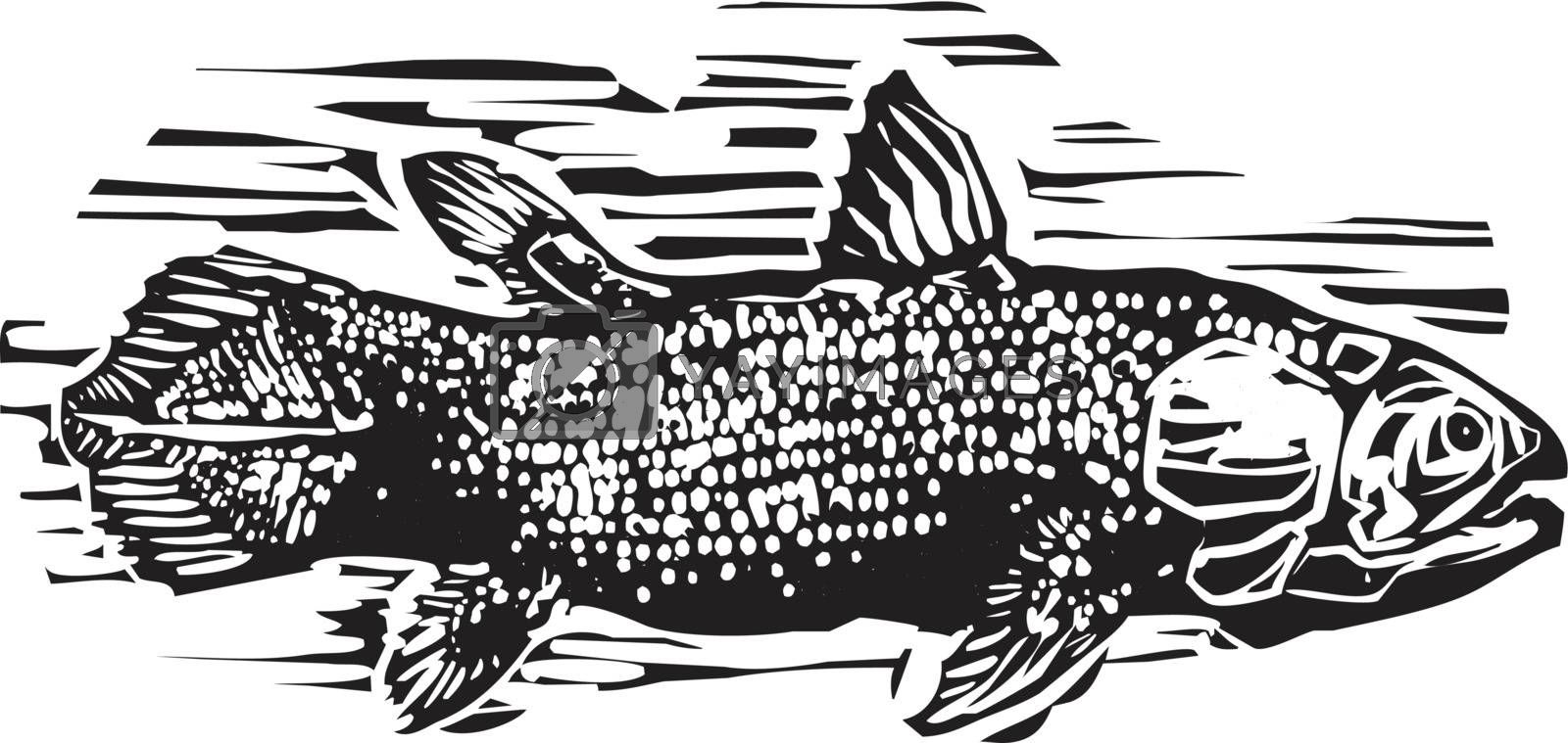 Woodcut style image of a Coelacanth the living fossil fish.