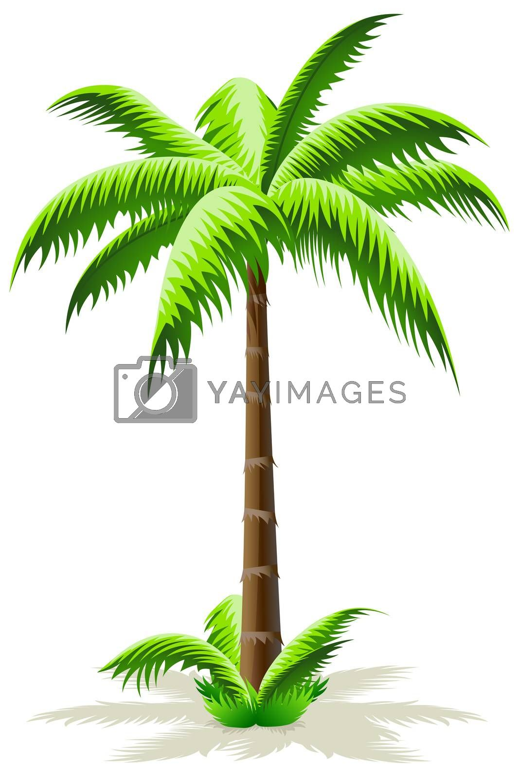 Palm Tree by WaD