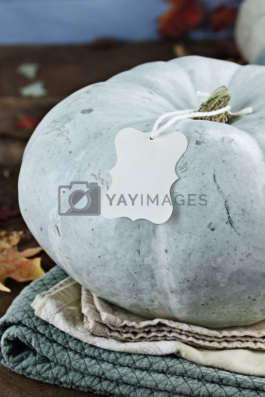 Blue or Teal Colored Pumpkin with Blank Tag by StephanieFrey