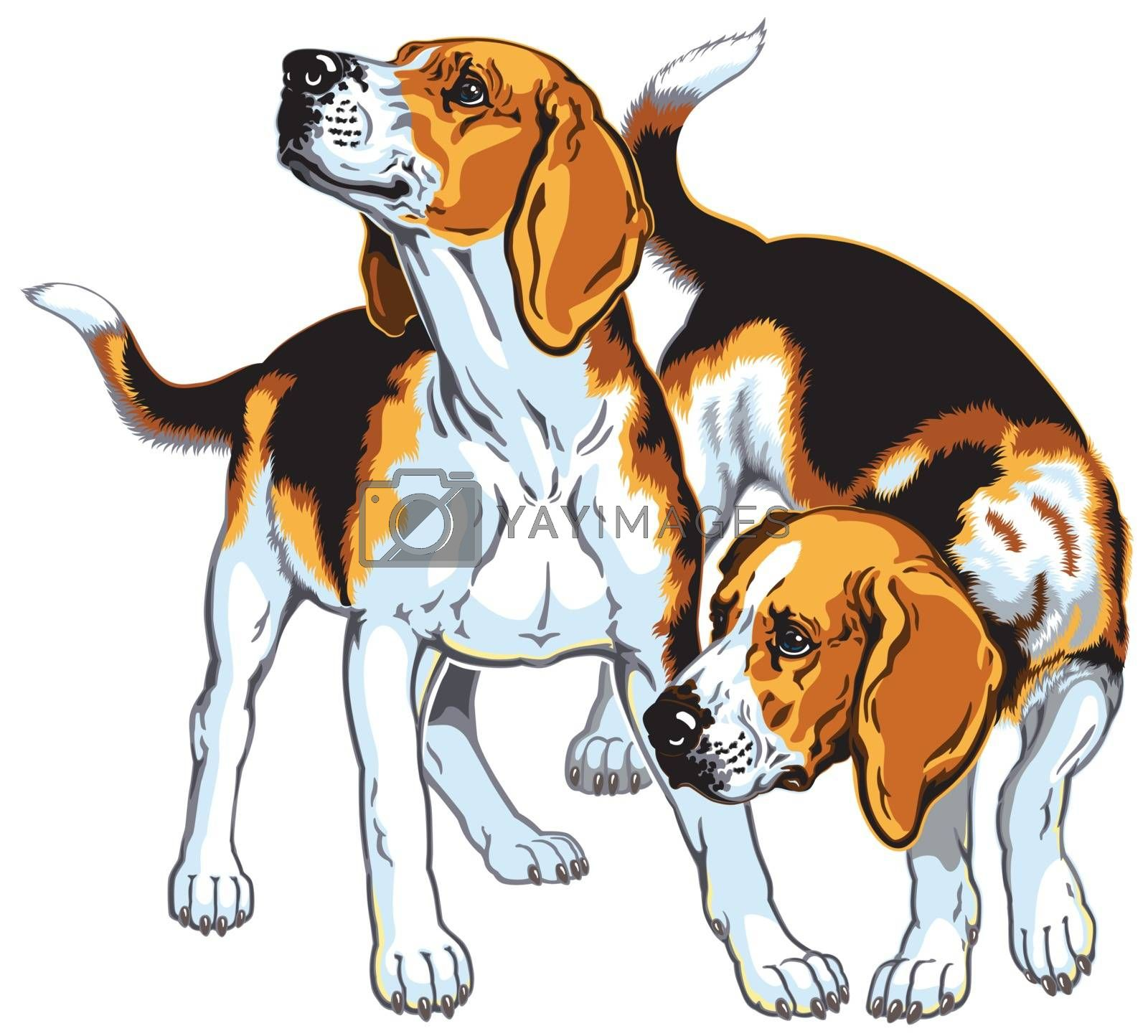 two beagle hounds by insima