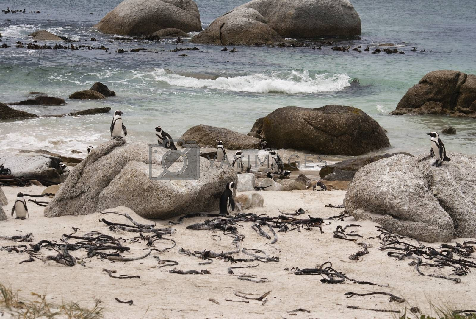 Penguin on a beach by Anna07