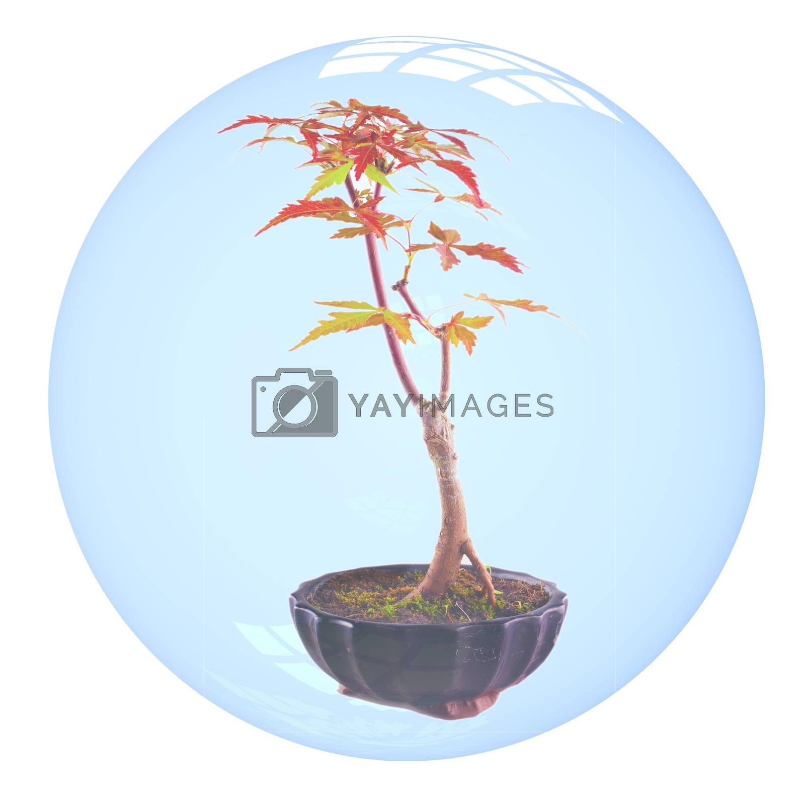 Bonsai in bubble by Koufax73