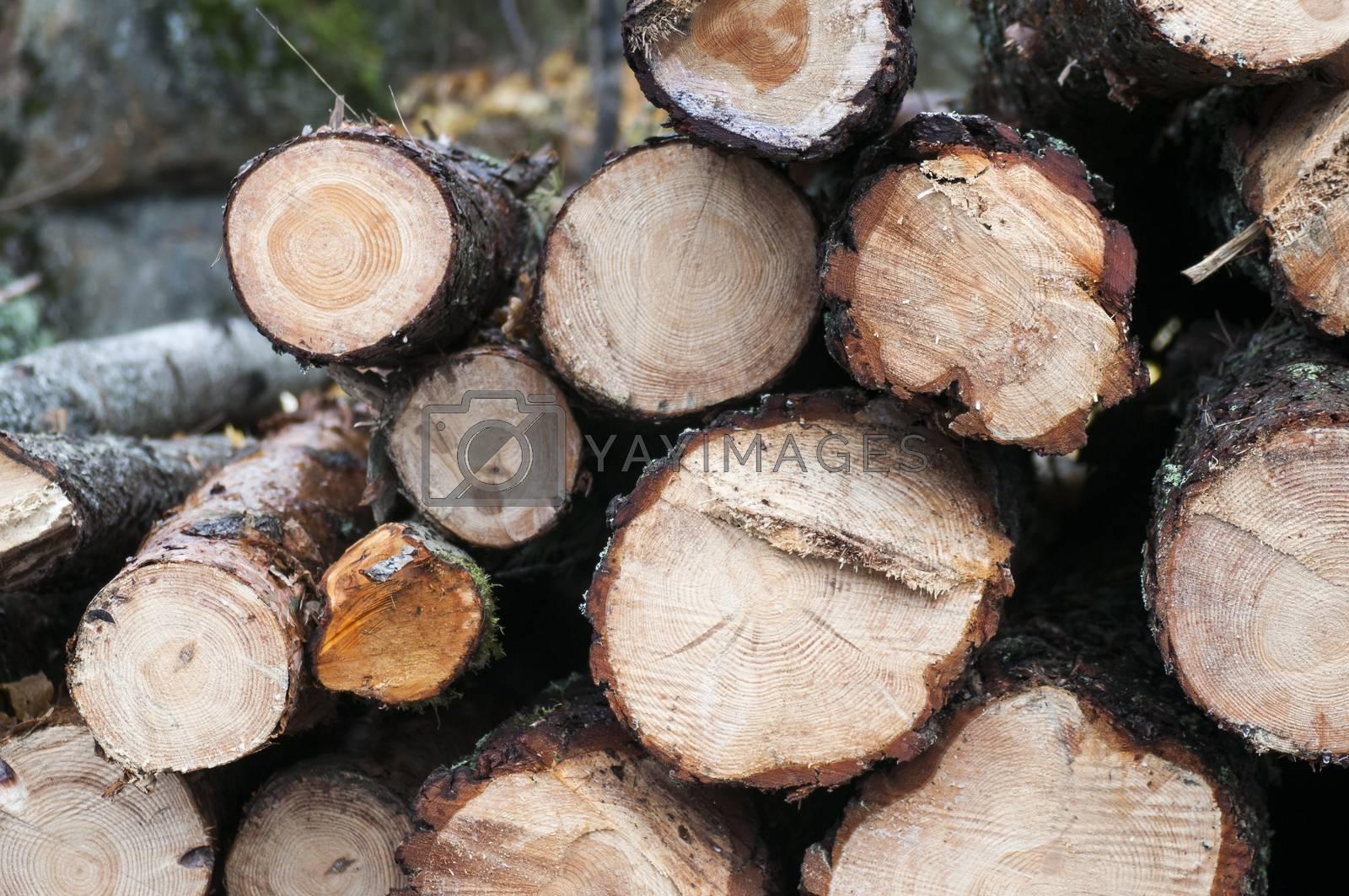 Timber Log Stack by ockra