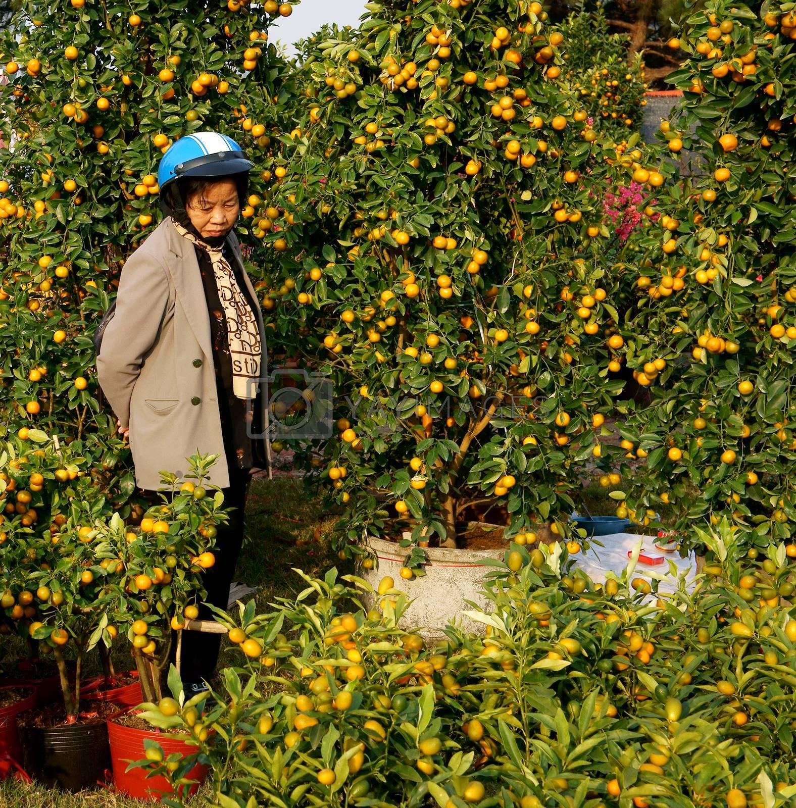 Vietnamese consumer choice at market by xuanhuongho