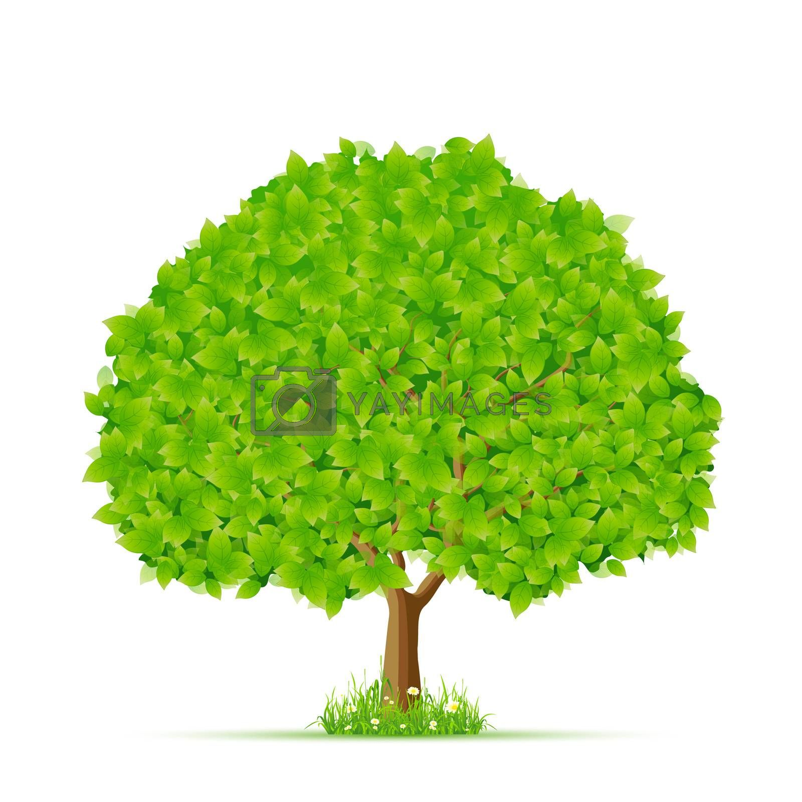 Isolated Green Tree with Grass and Flowers by WaD