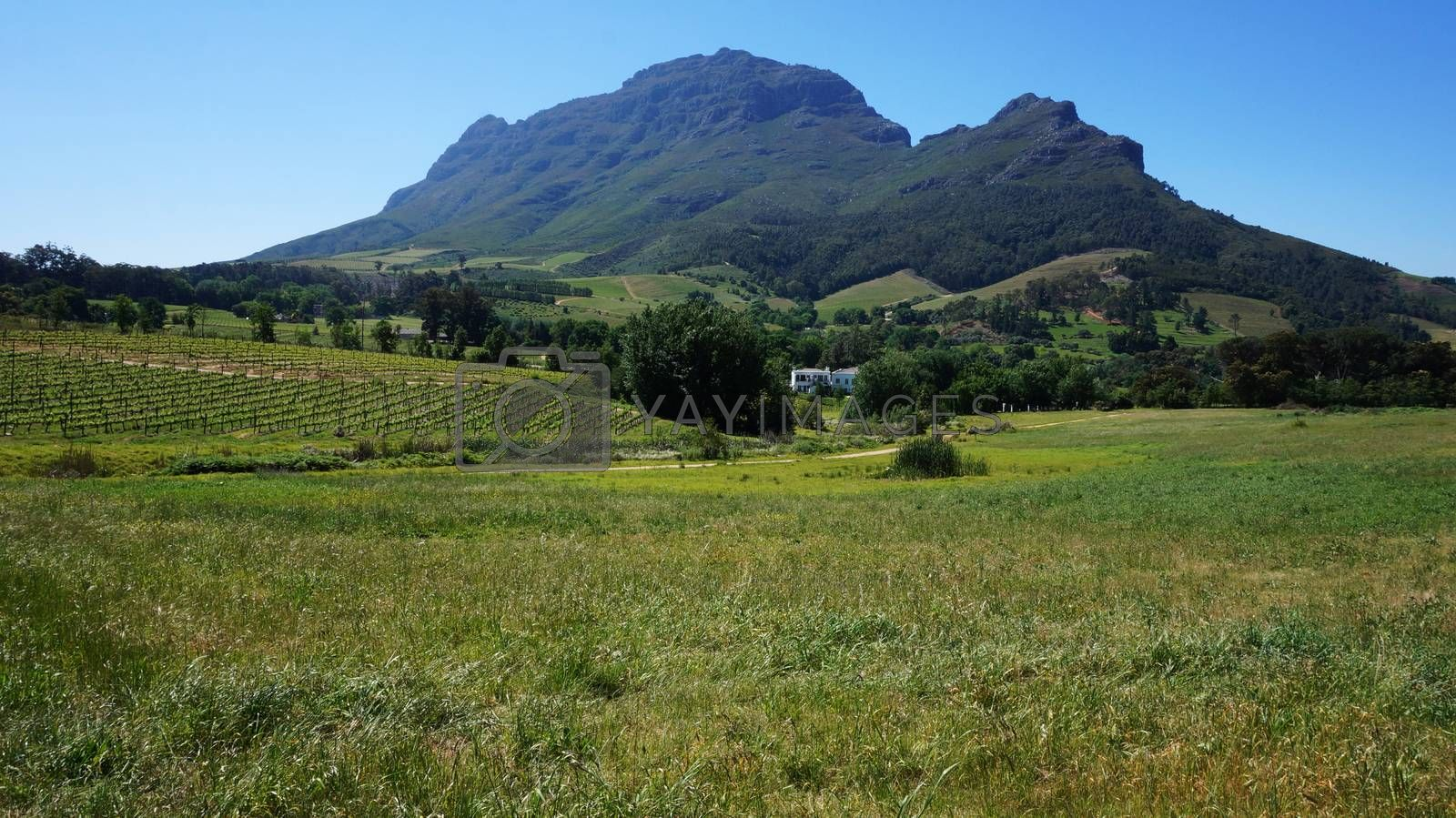 Mountains in Stellenbosch wine region, outside of Cape Town, Sou by tang90246