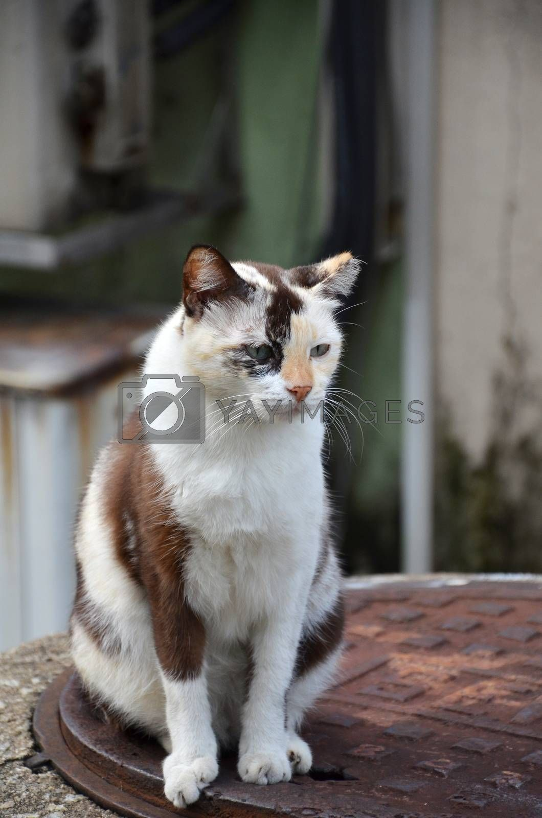Cute striped street cat by tang90246