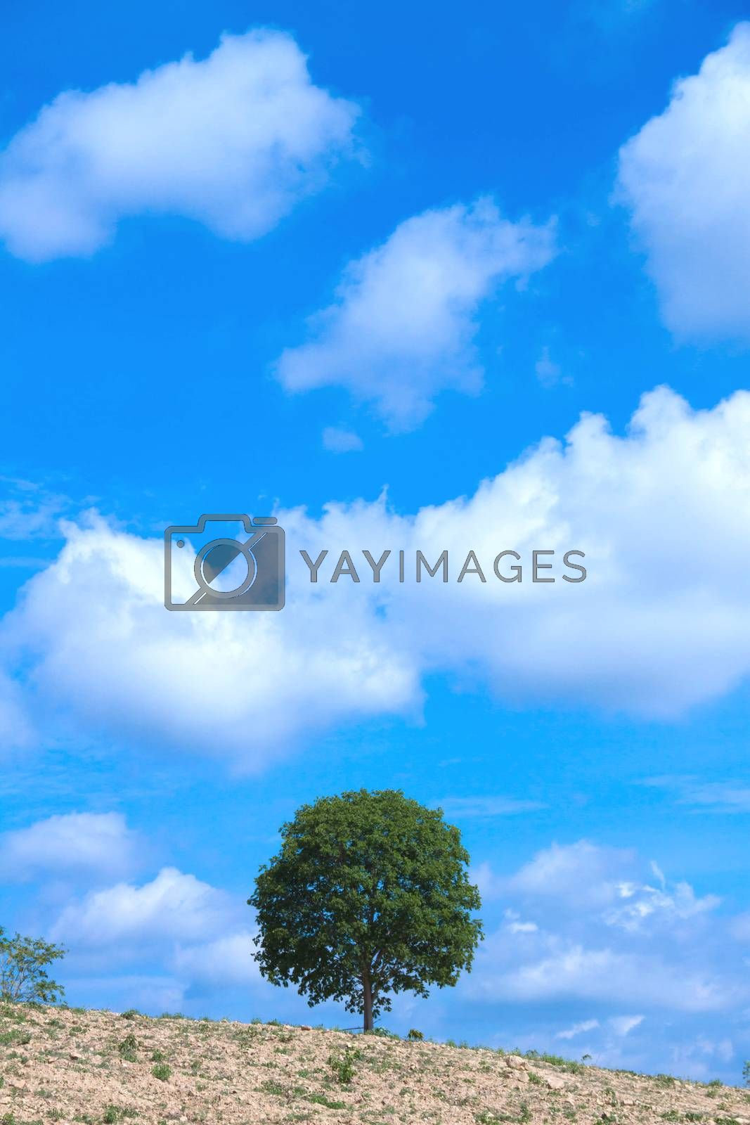 Tree and sky by jee1999