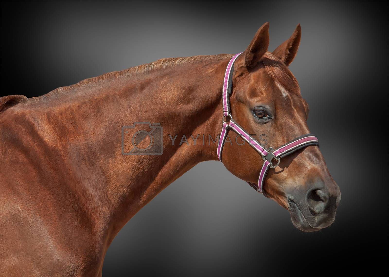 Portrait of a beautiful horse on abstract background