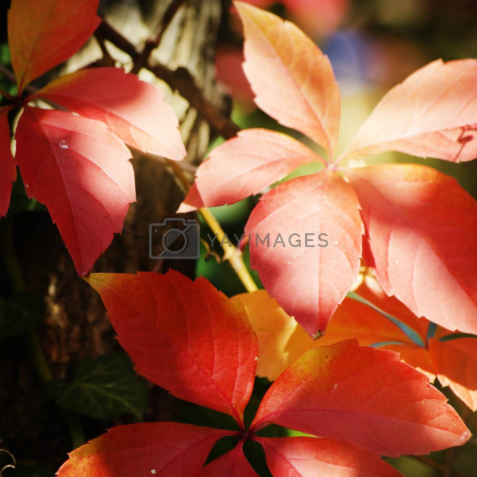 Bright Autumn Tree Leaves in Sunny Day