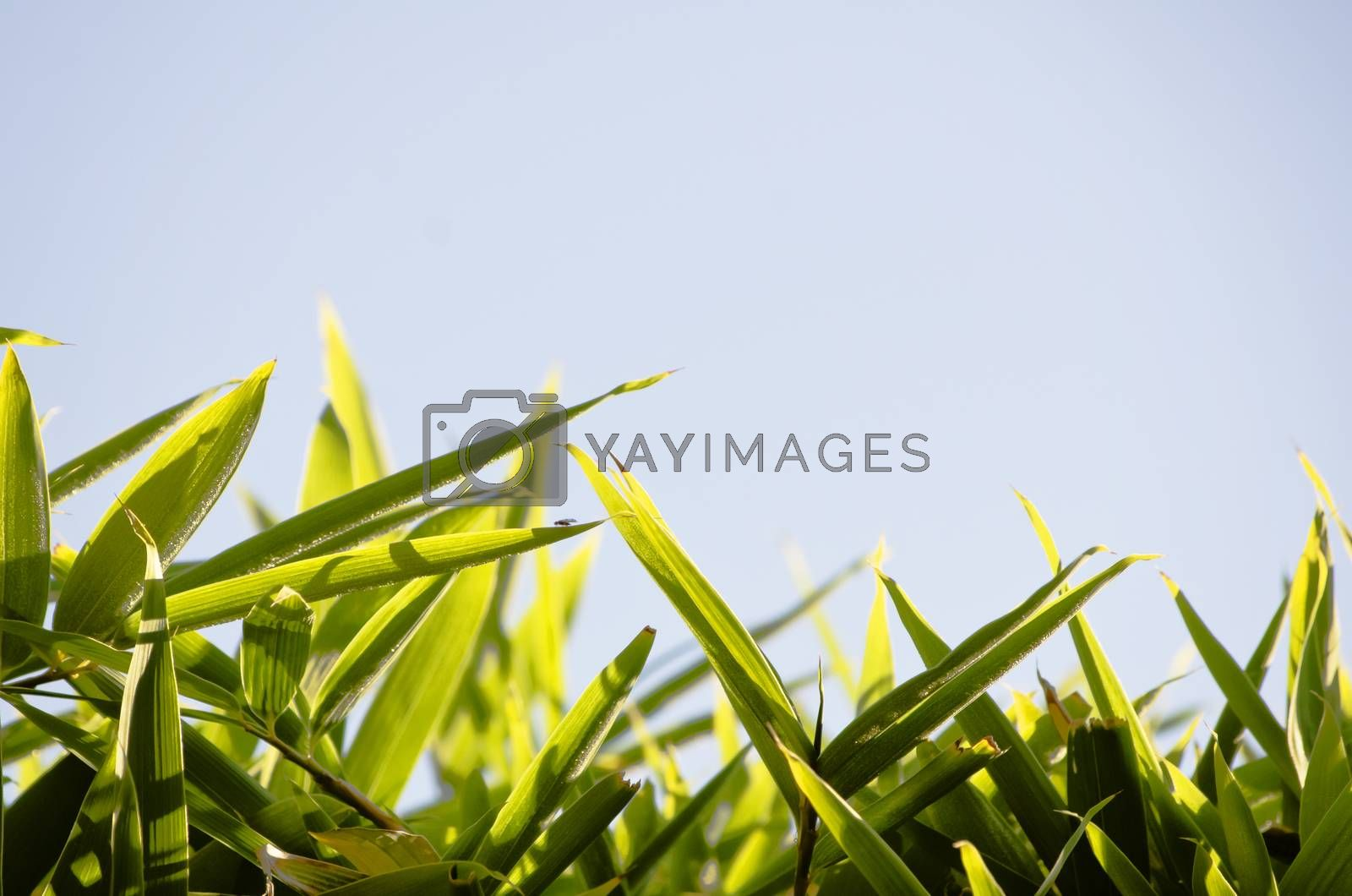 Green Leaves Natural Bamboo Frame Over Blue Sky Copyspace