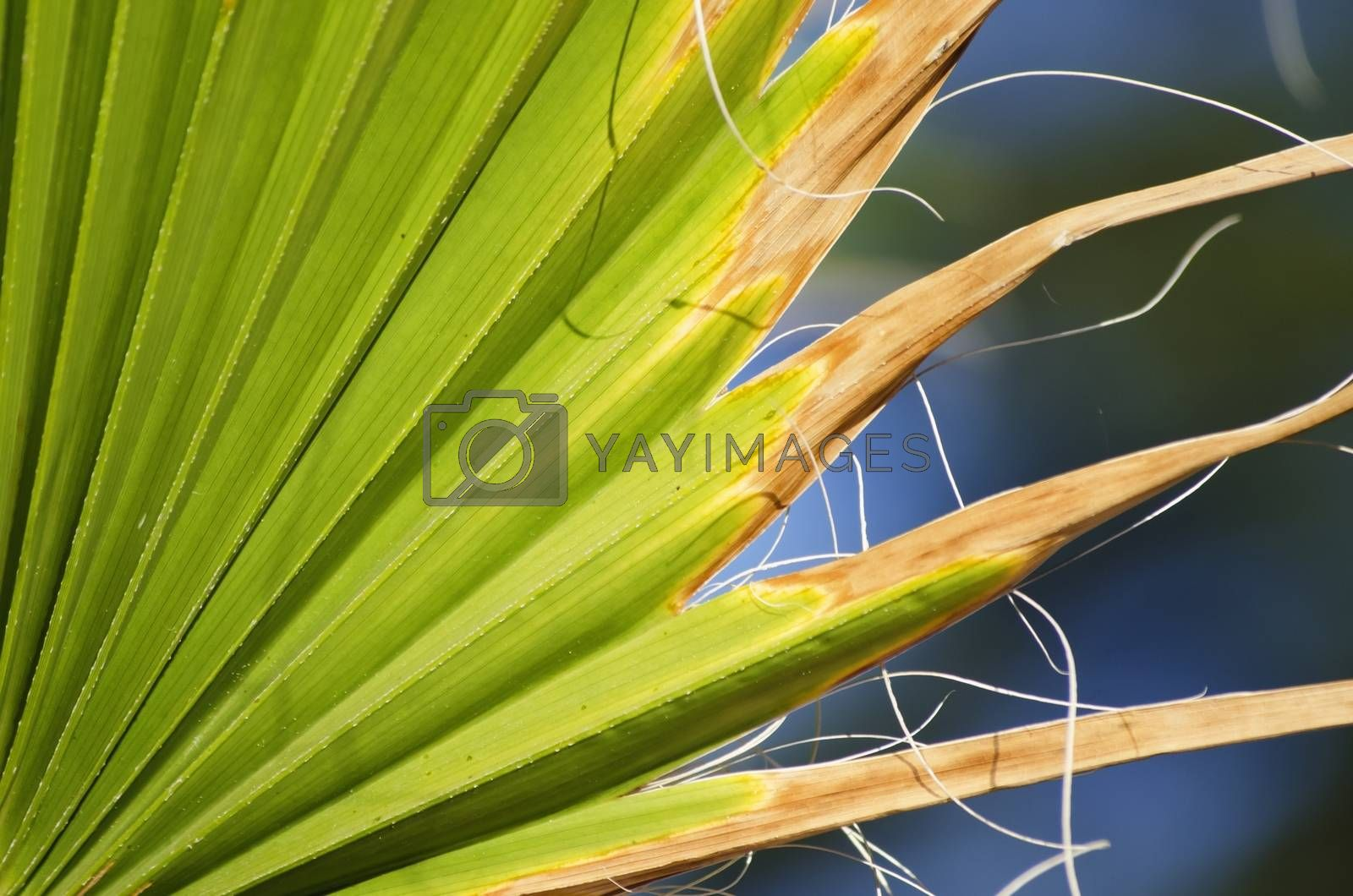 Green Palm Leaf Abstract Background