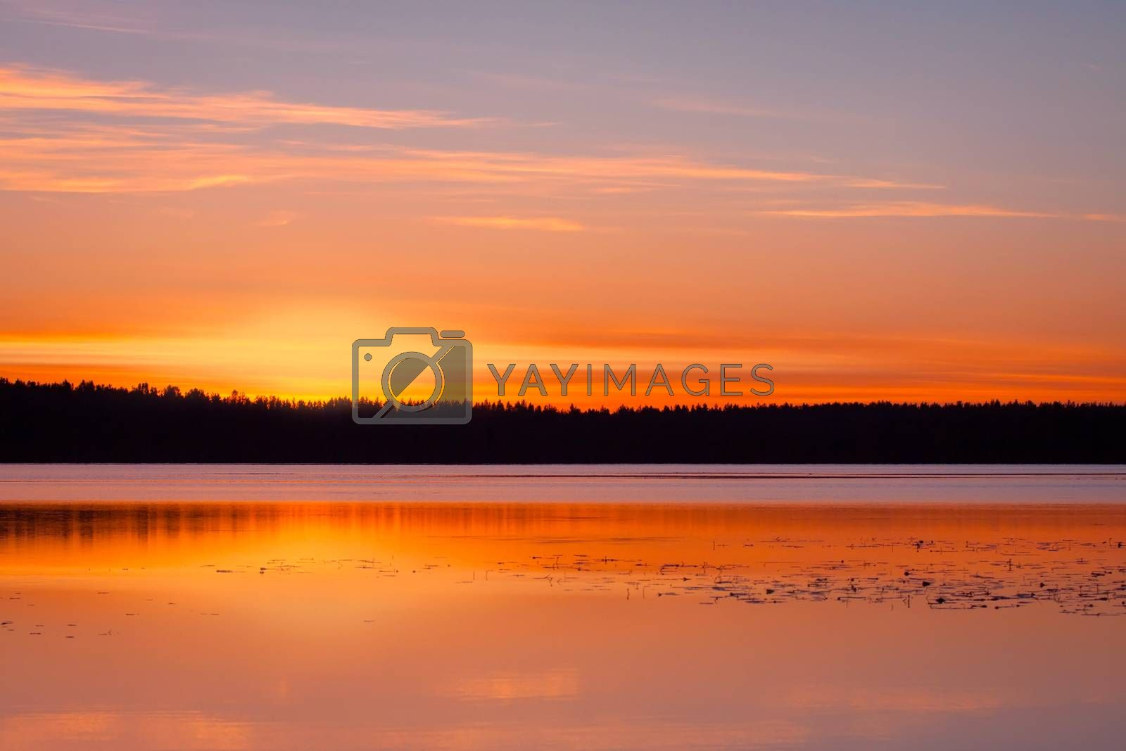 Beautiful landscape: forest lake at sunset