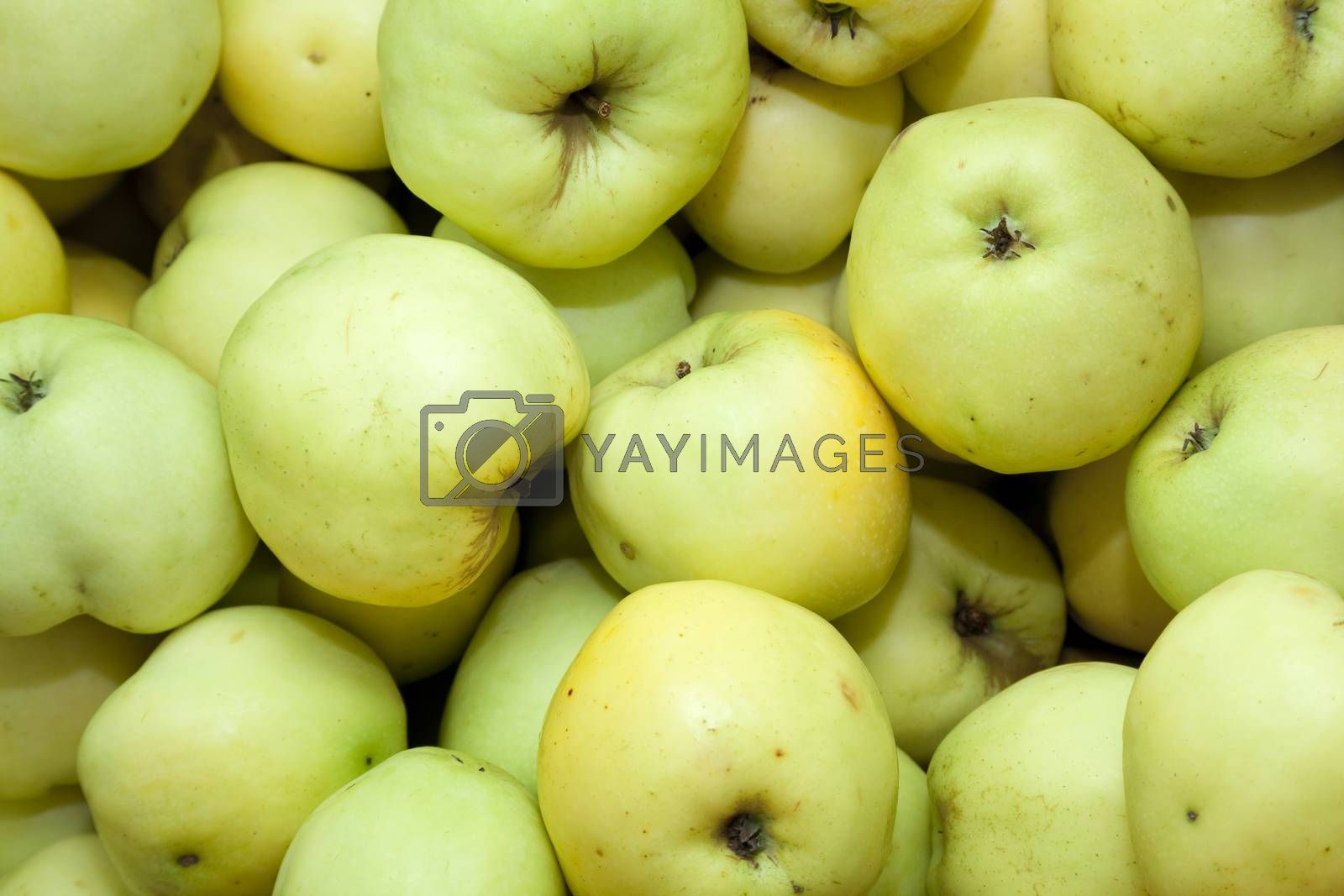 green apple (Malus domestica Borkh) as background