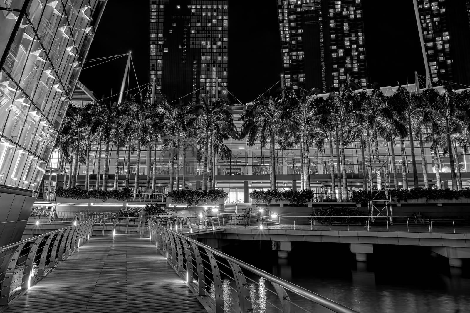 Palm trees at marina mall lighted at night
