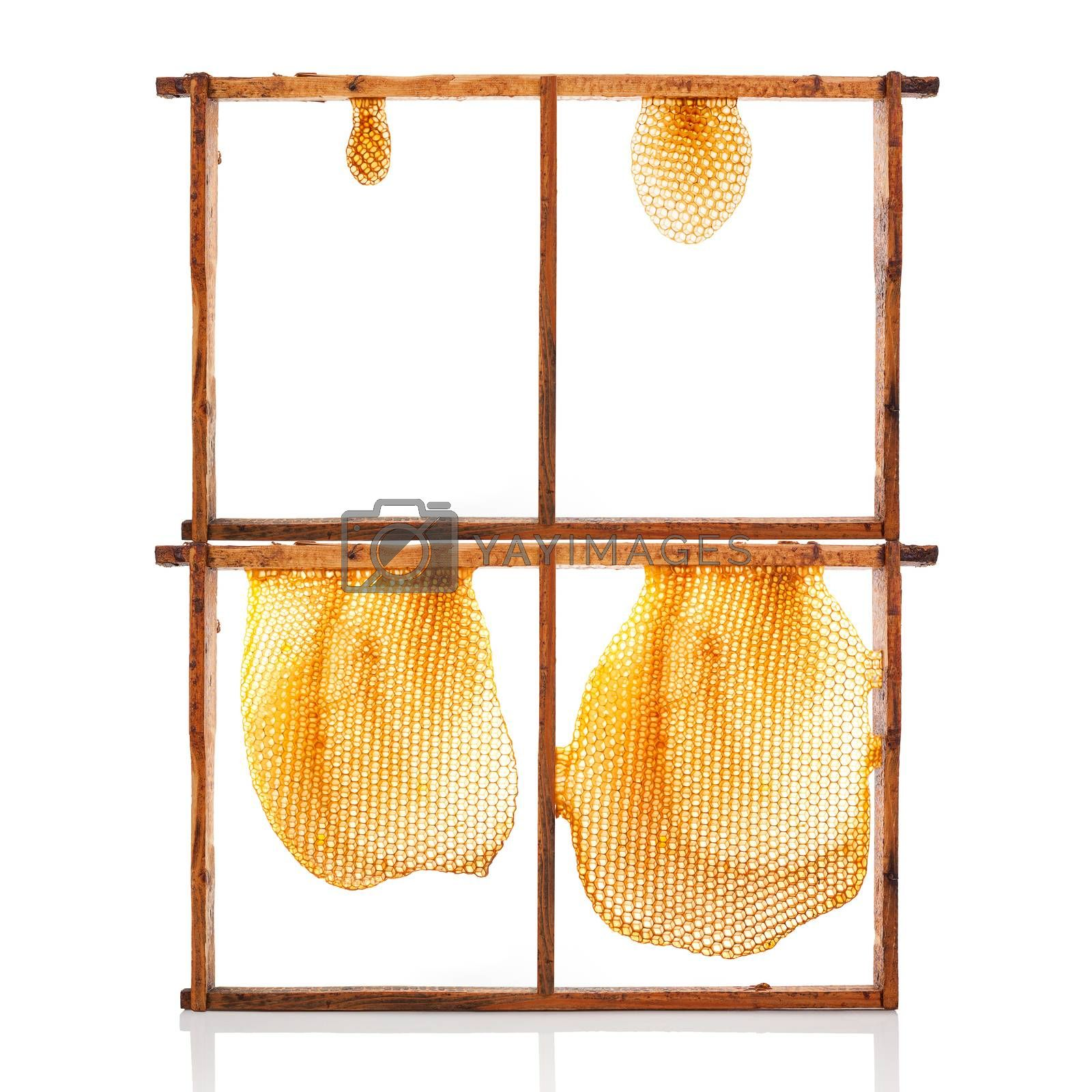 Organic honey in honeycomb over white background. Honey making and Beekeeping.