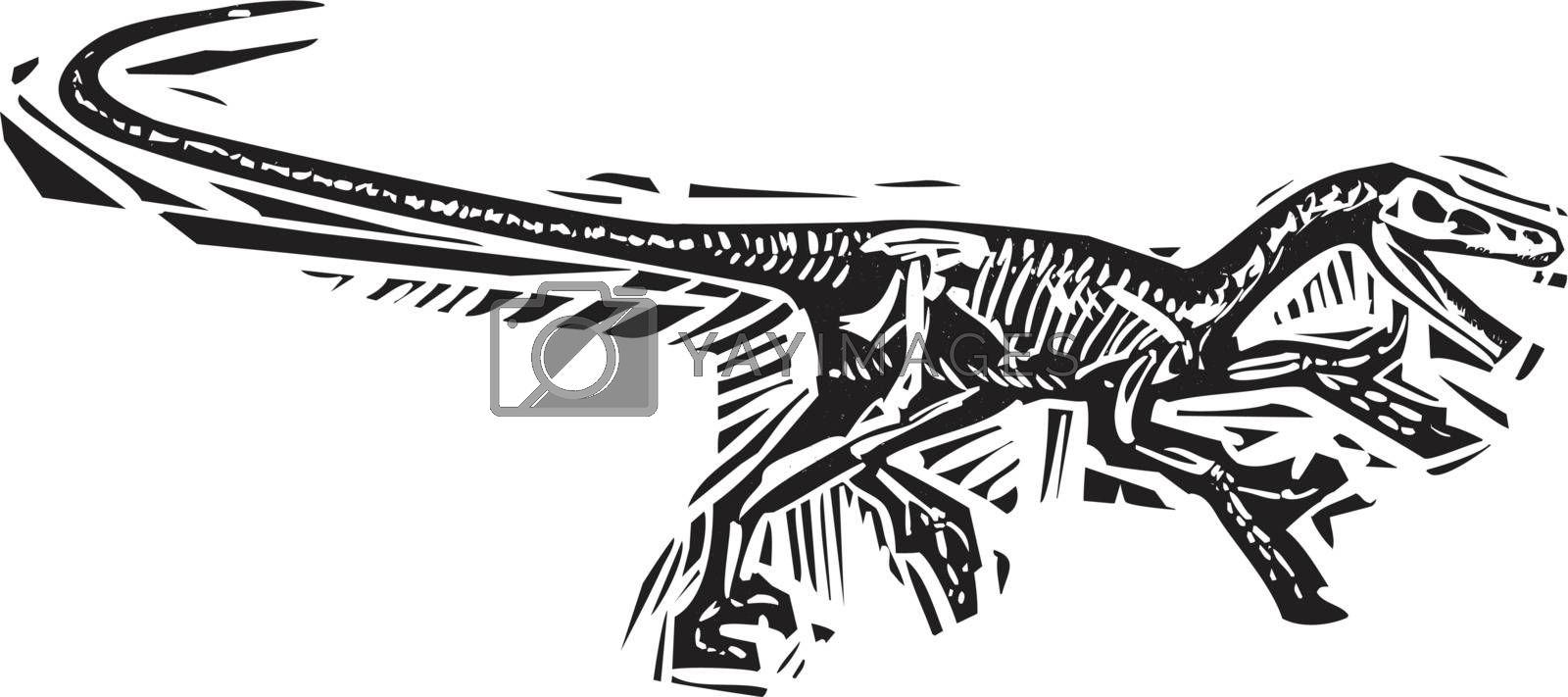 Woodcut style image of a fossil of a running Velociraptor dinosaur