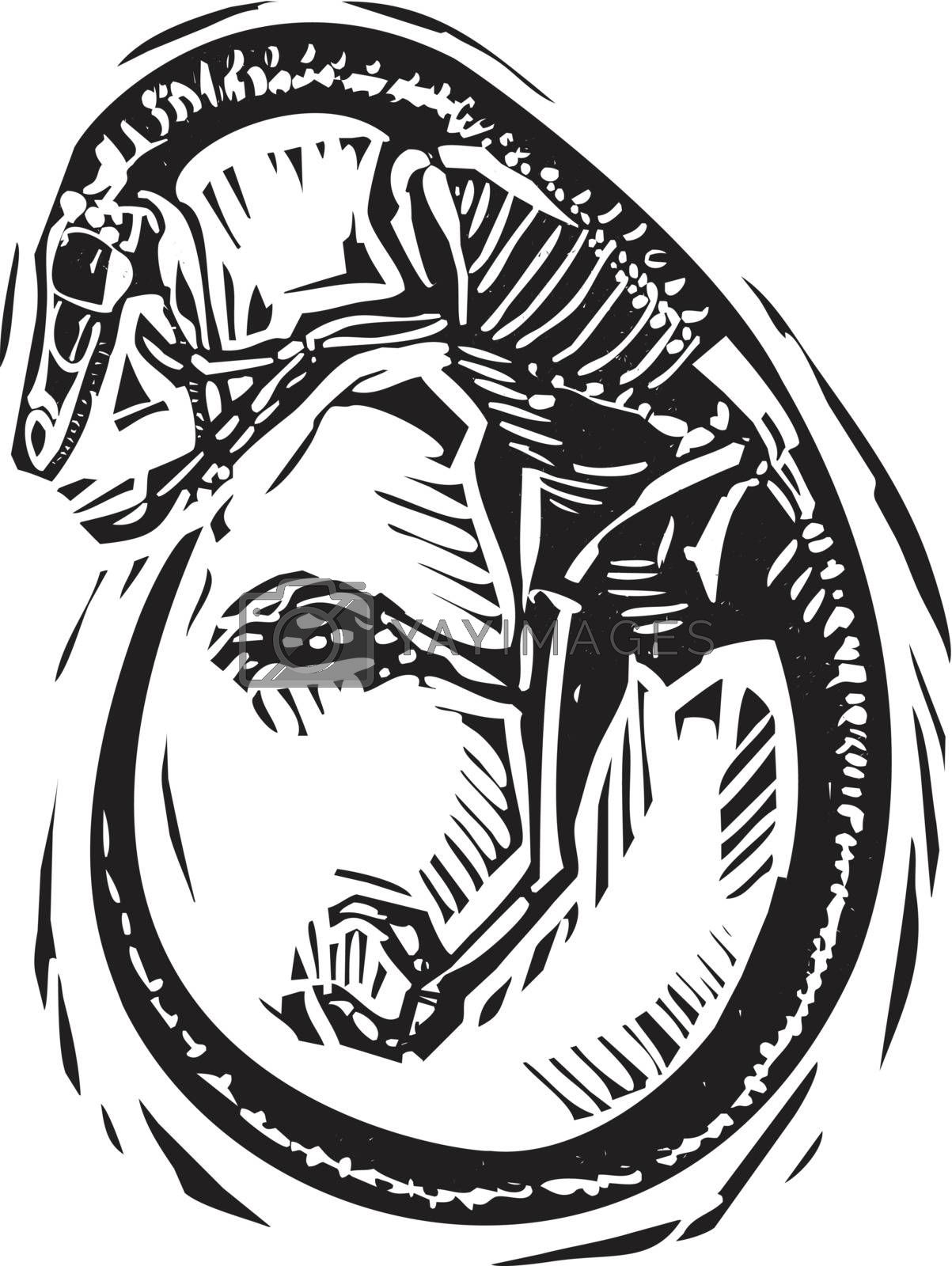 Woodcut style image of a fossil of a curled Velociraptor dinosaur