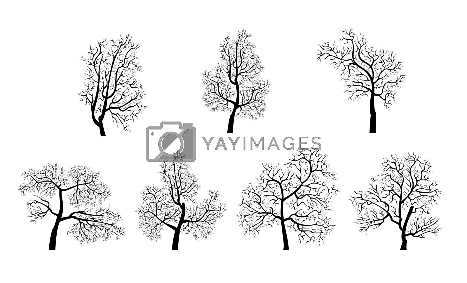 The silhouettes of the trees on a white background. Trees without leaves.