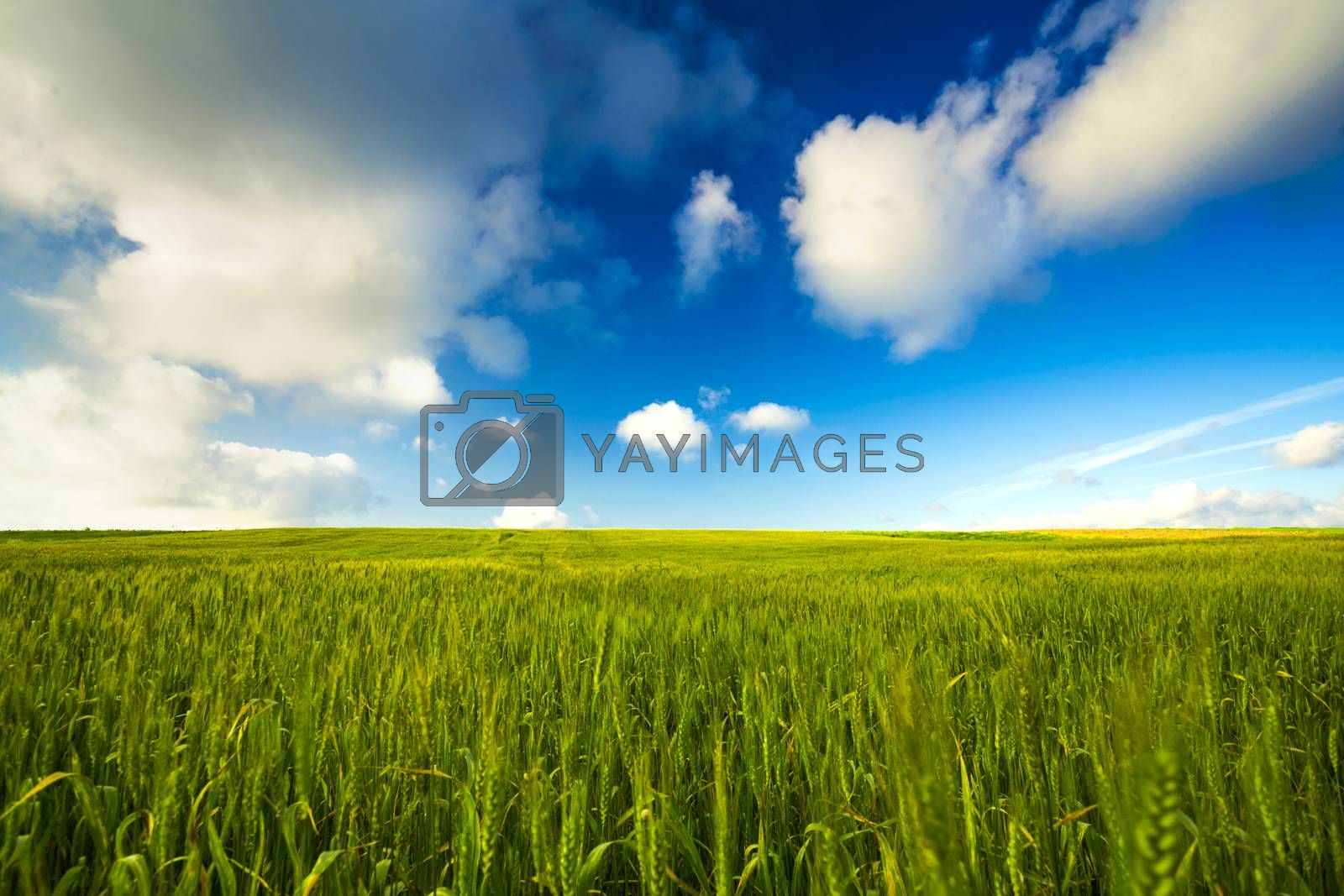 Beautiful landscape with an amazing blue sky and white clouds