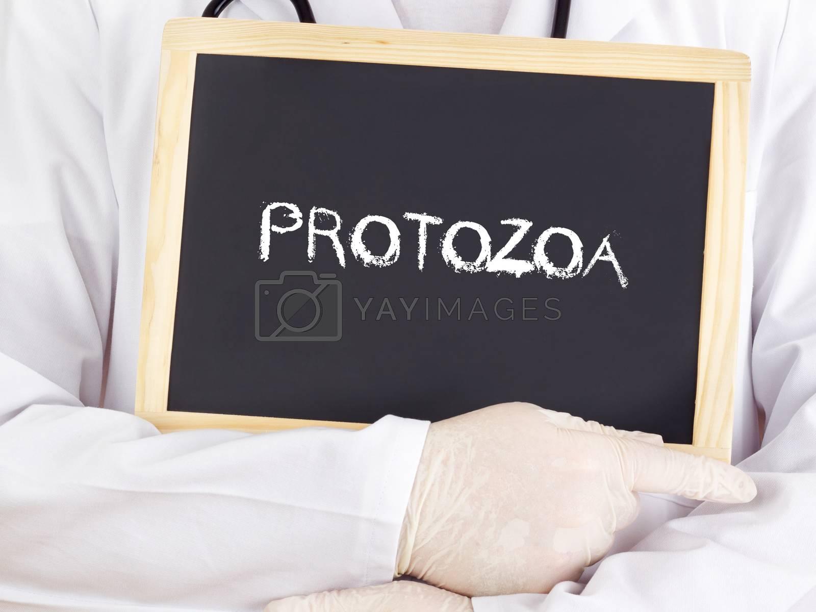 Doctor shows information: protozoa