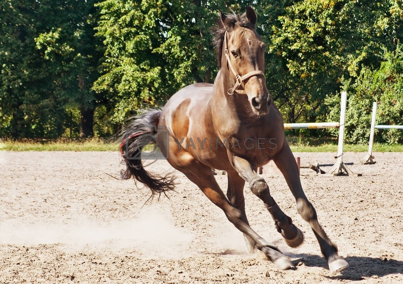 Beautiful horse making a gallop in ranch