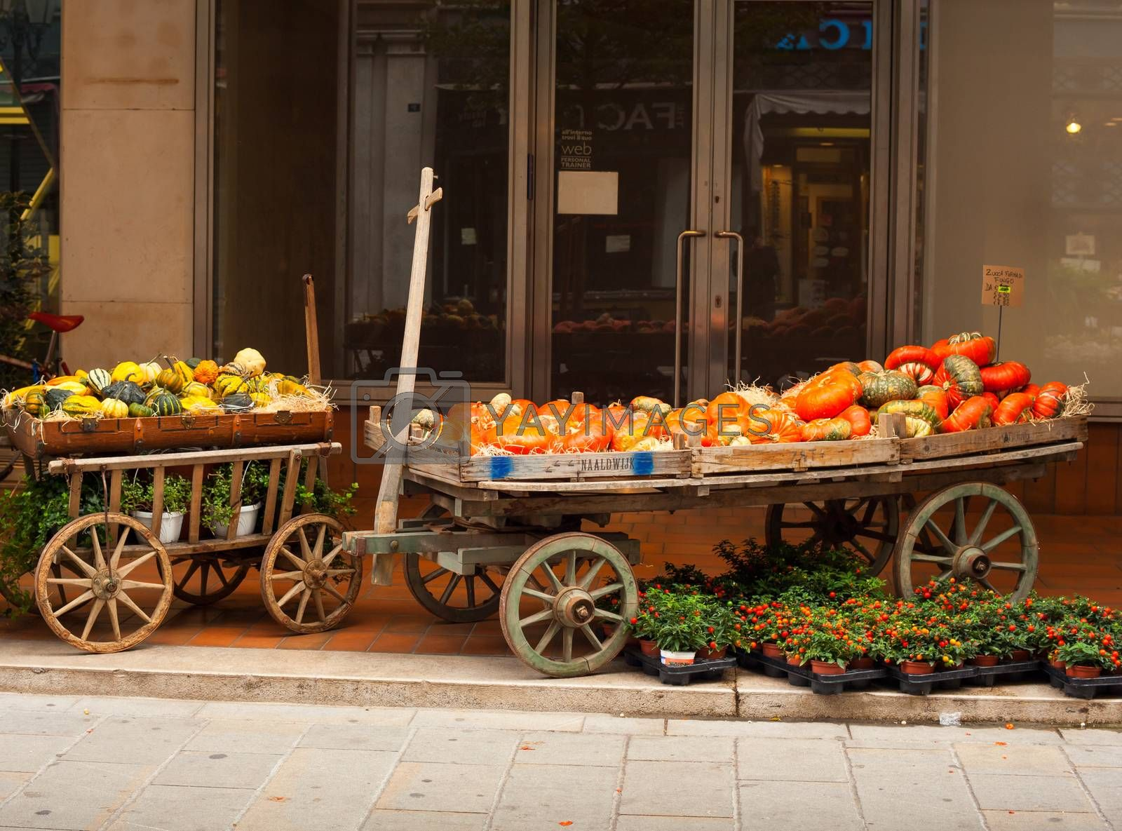 View of Pumpkins on vintage wooden cart