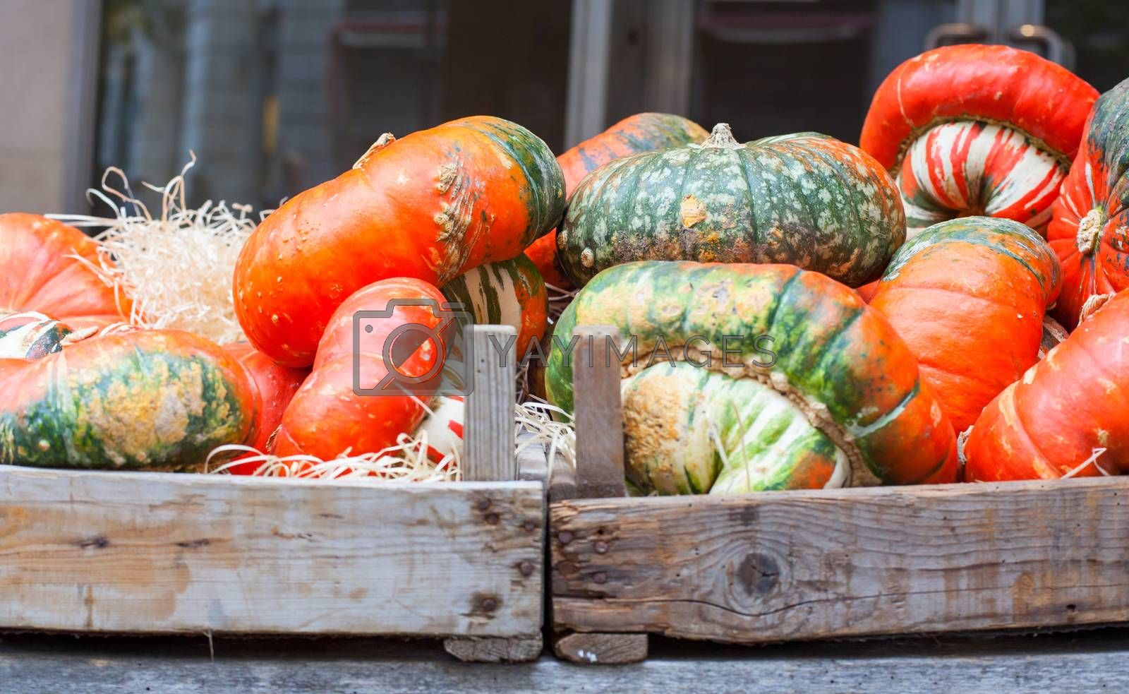 View of Pumpkins in the street market
