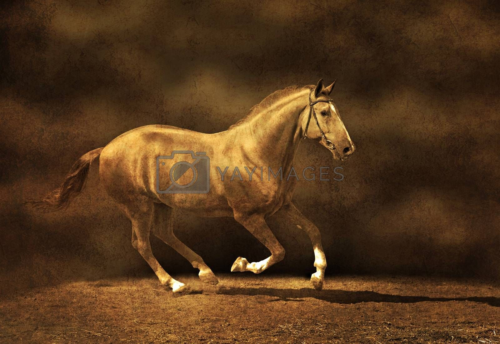 Beautiful stallion on dark background, textured image