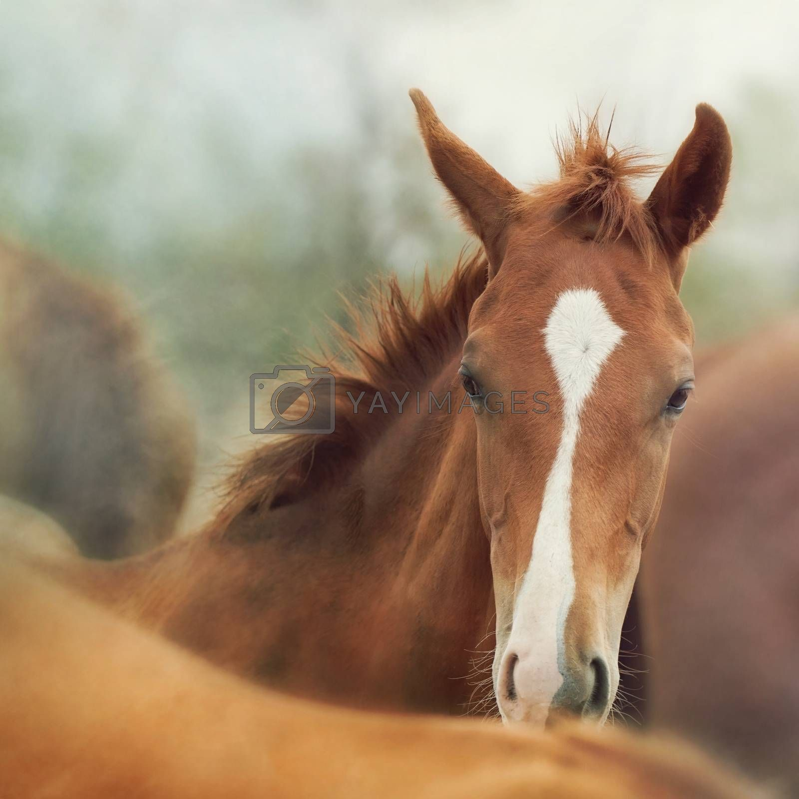 Portrait of a cute foal