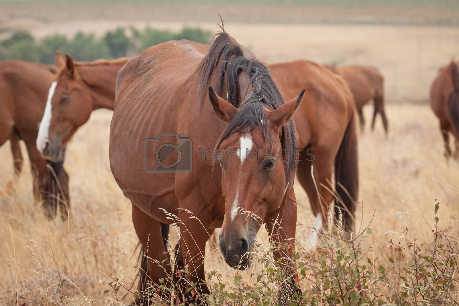 Herd of horses in the steppe