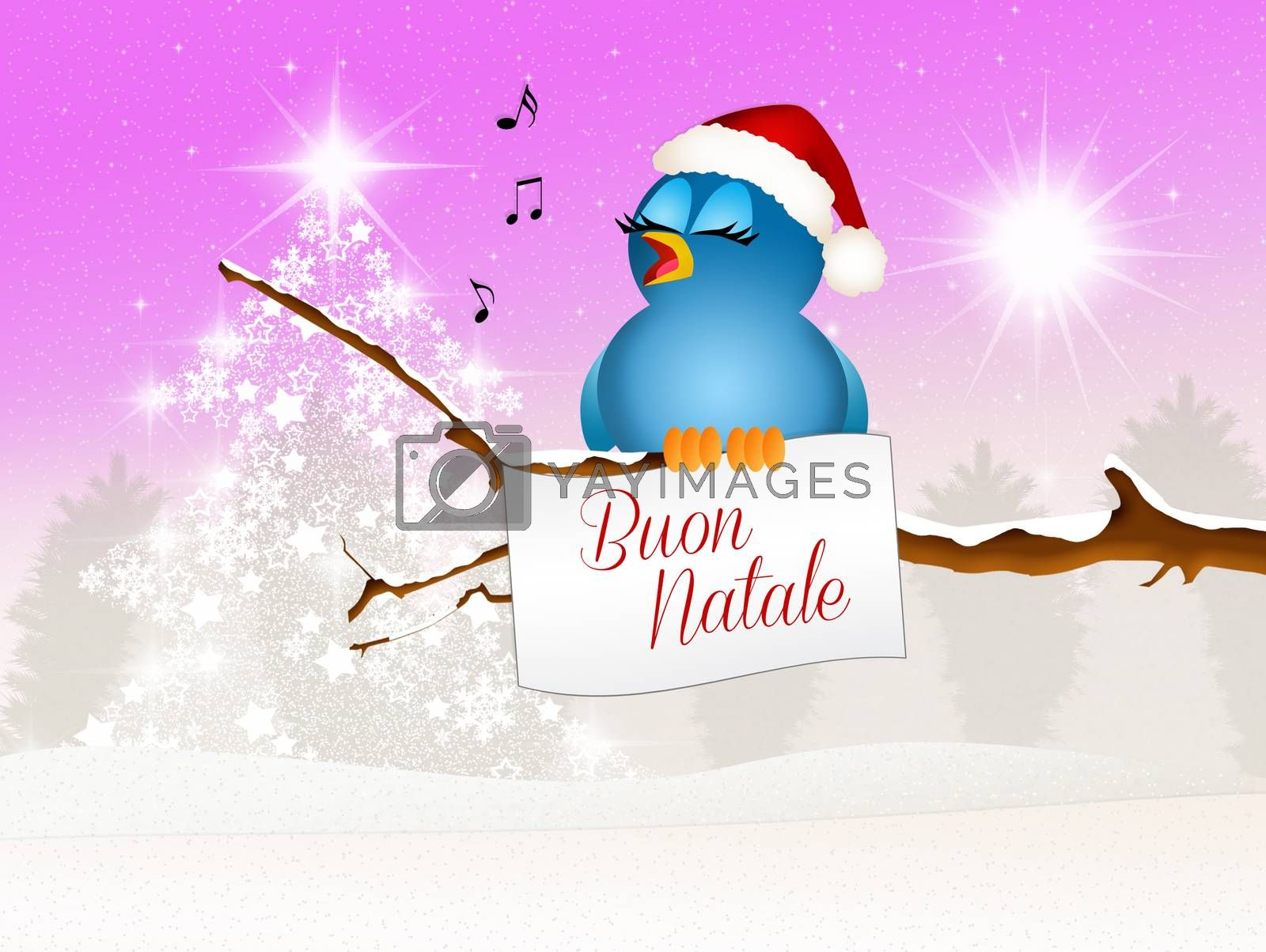 Bird at Christmas