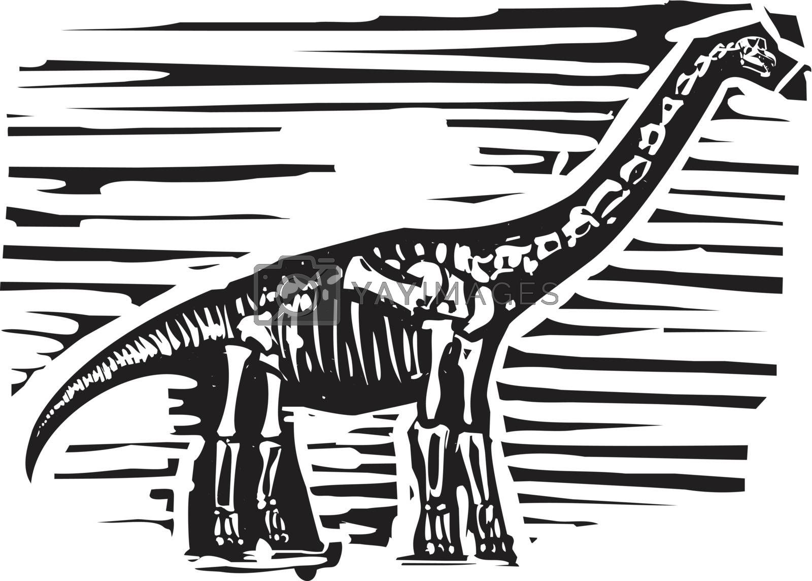 Apatosaurus Fossil by Xochicalco