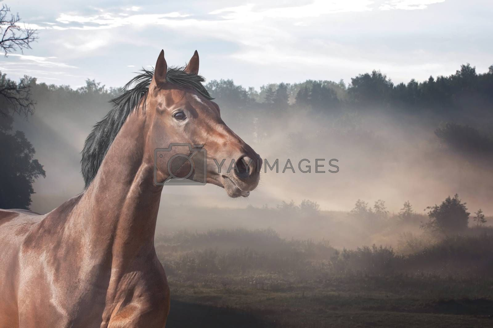 Horse on summer meadow at sunrise time