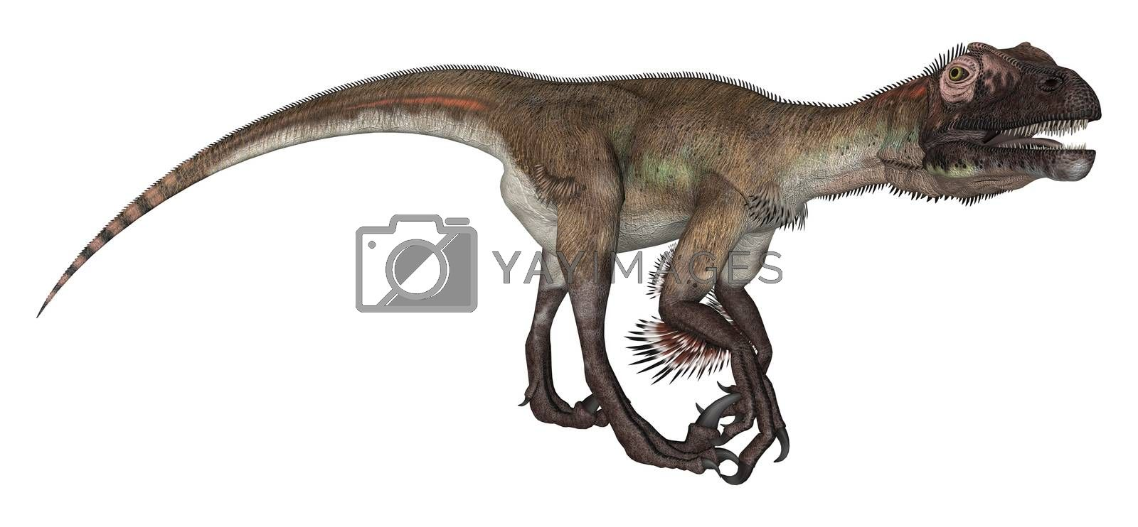 3D digital render of a curious dinosaur utahraptor looking down isolated on white background