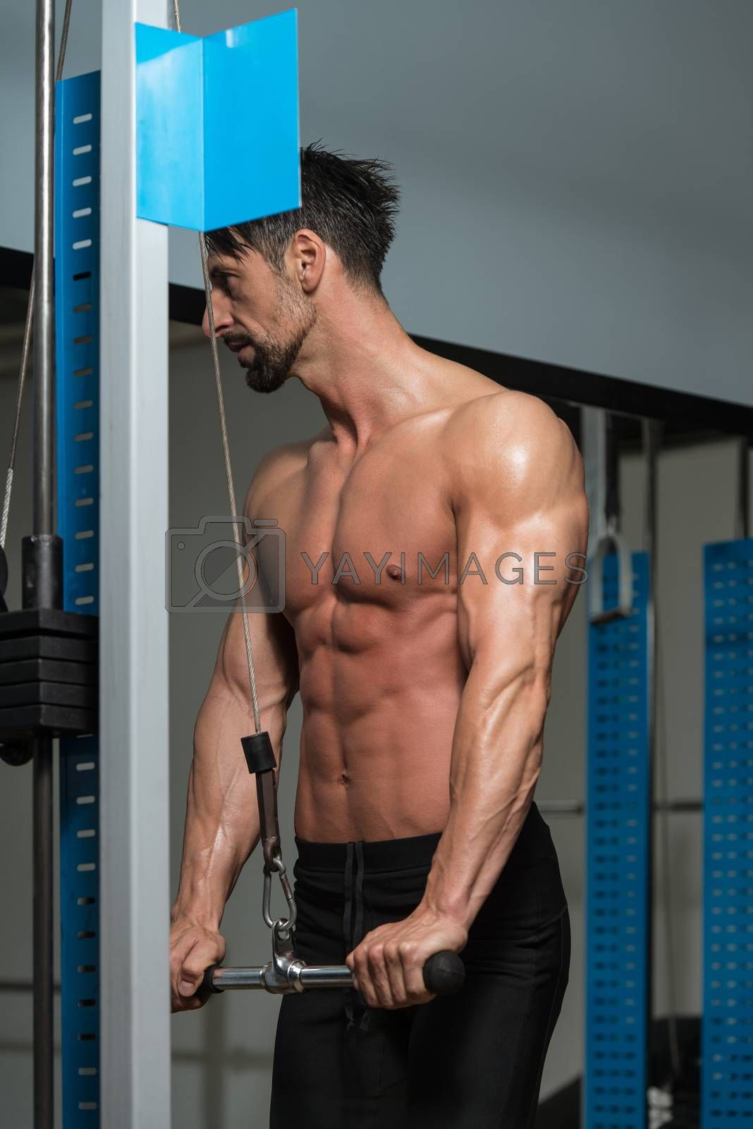 Young Athlete Doing Heavy Weight Exercise For Triceps