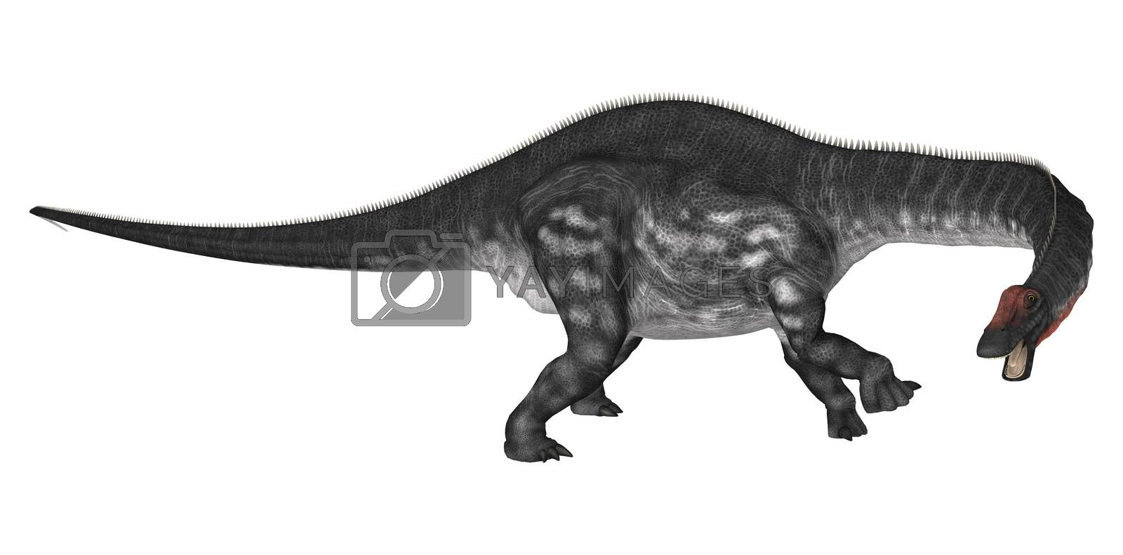 3D digital render of a curious dinosaur apatosaurus looking down isolated on white background