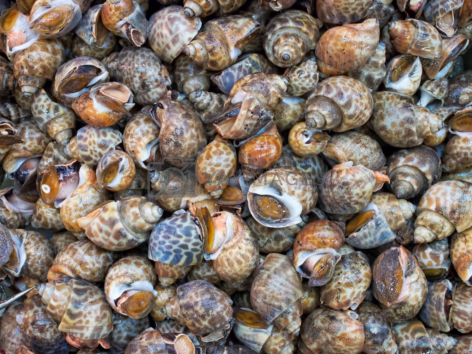 Royalty free image of live sea snails food background by zkruger