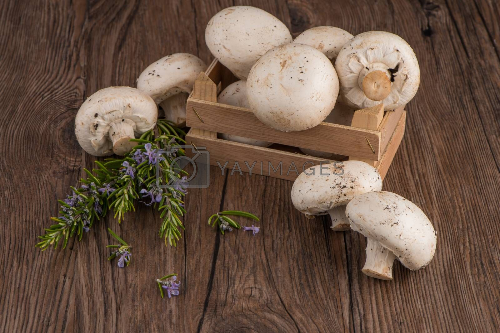 Royalty free image of Champignons in a wooden box by homydesign