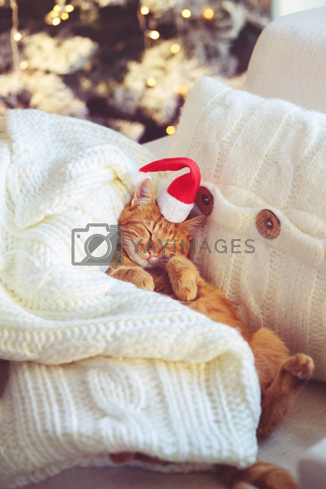 Lovable ginger cat wearing Santa Claus hat sleeping on chair under Christmas tree at home