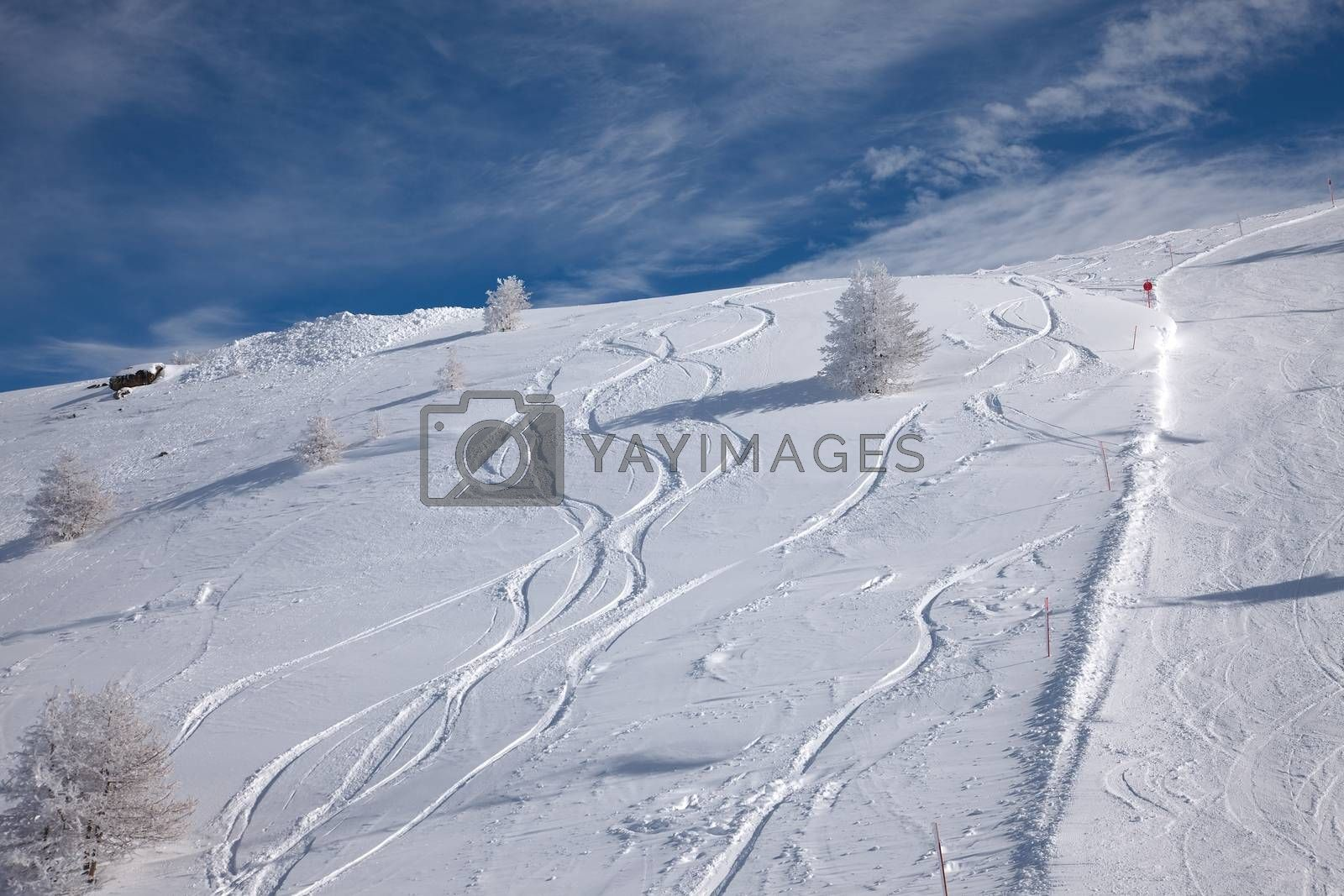 Snowboarders curves in the snow