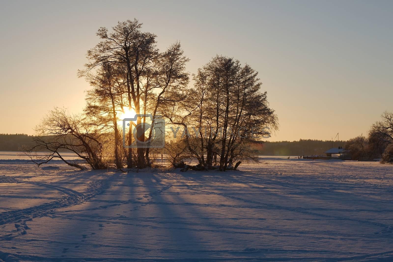 Winter landscape with setting sun
