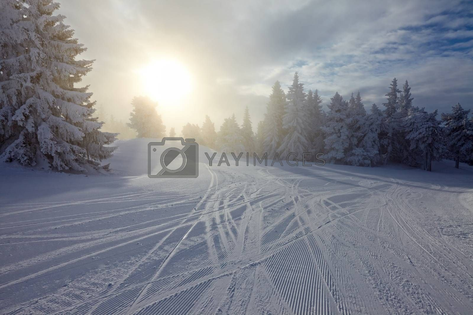 Forest in winter covered in snow