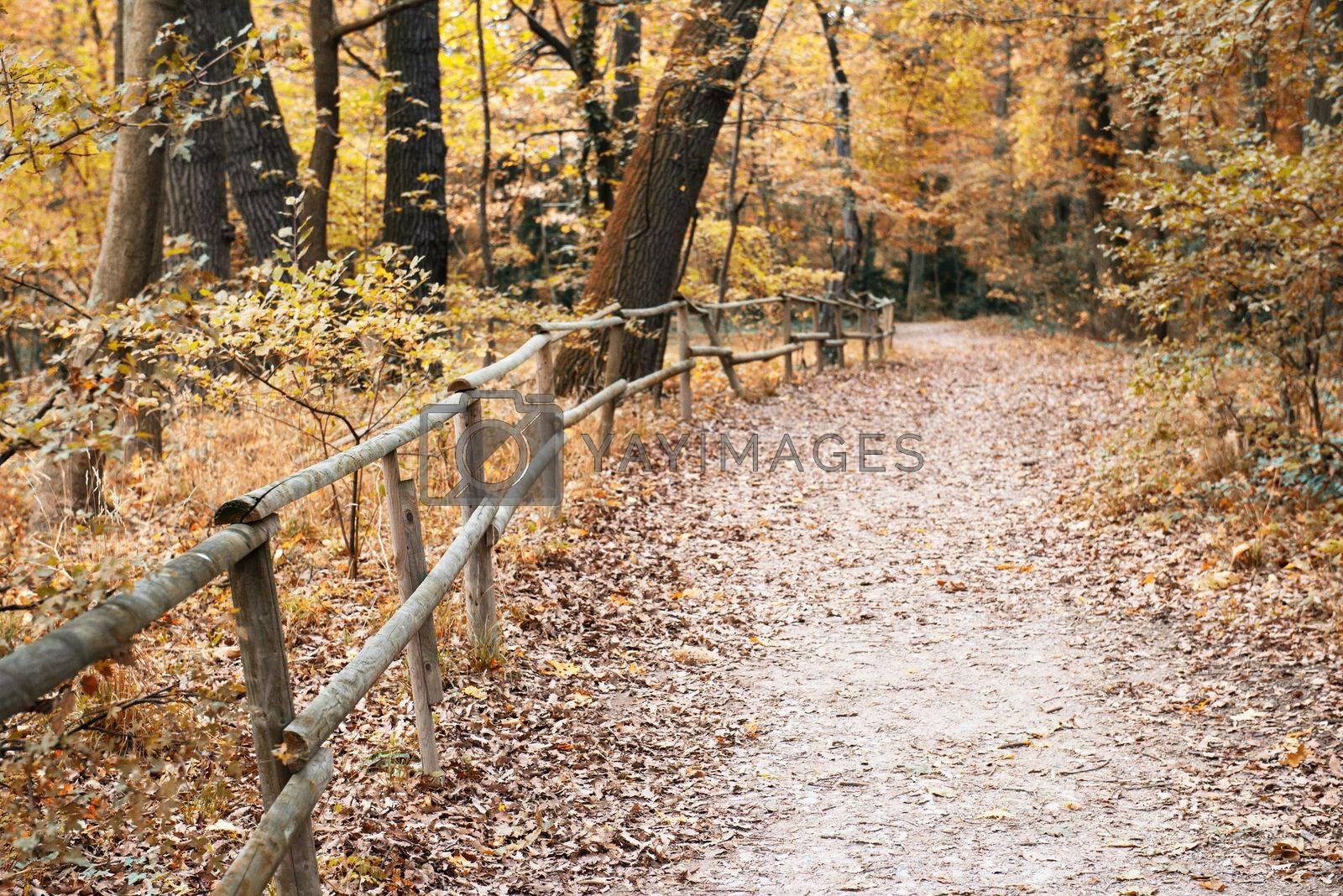 forest trail in autumn season