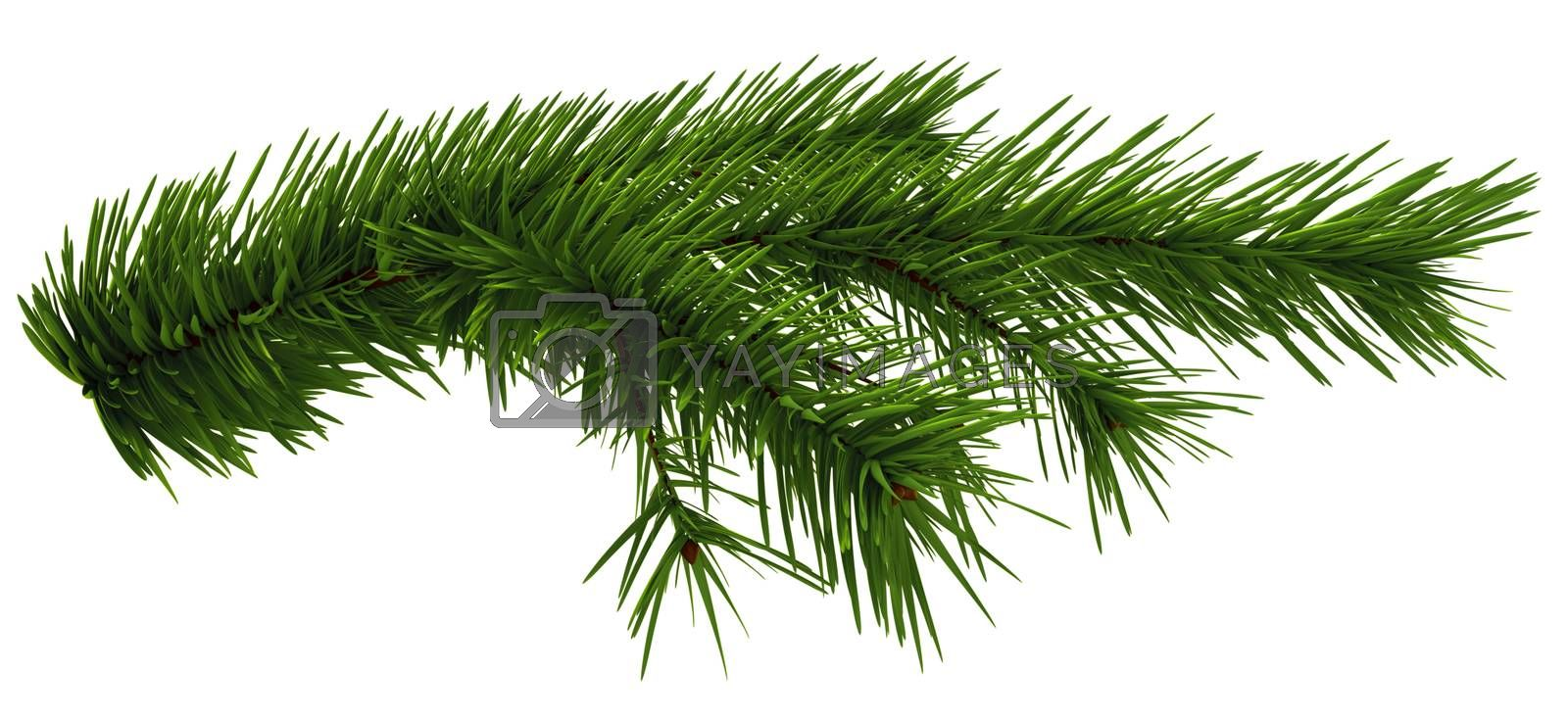 Christmas tree fir branch on white background
