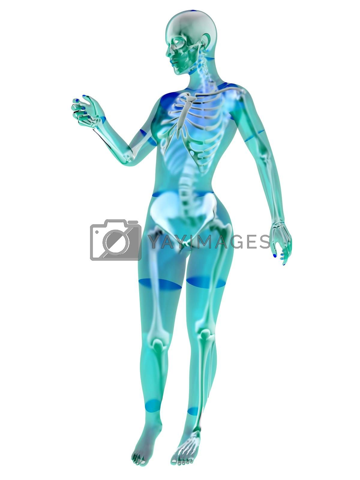 Female Anatomy by Spectral