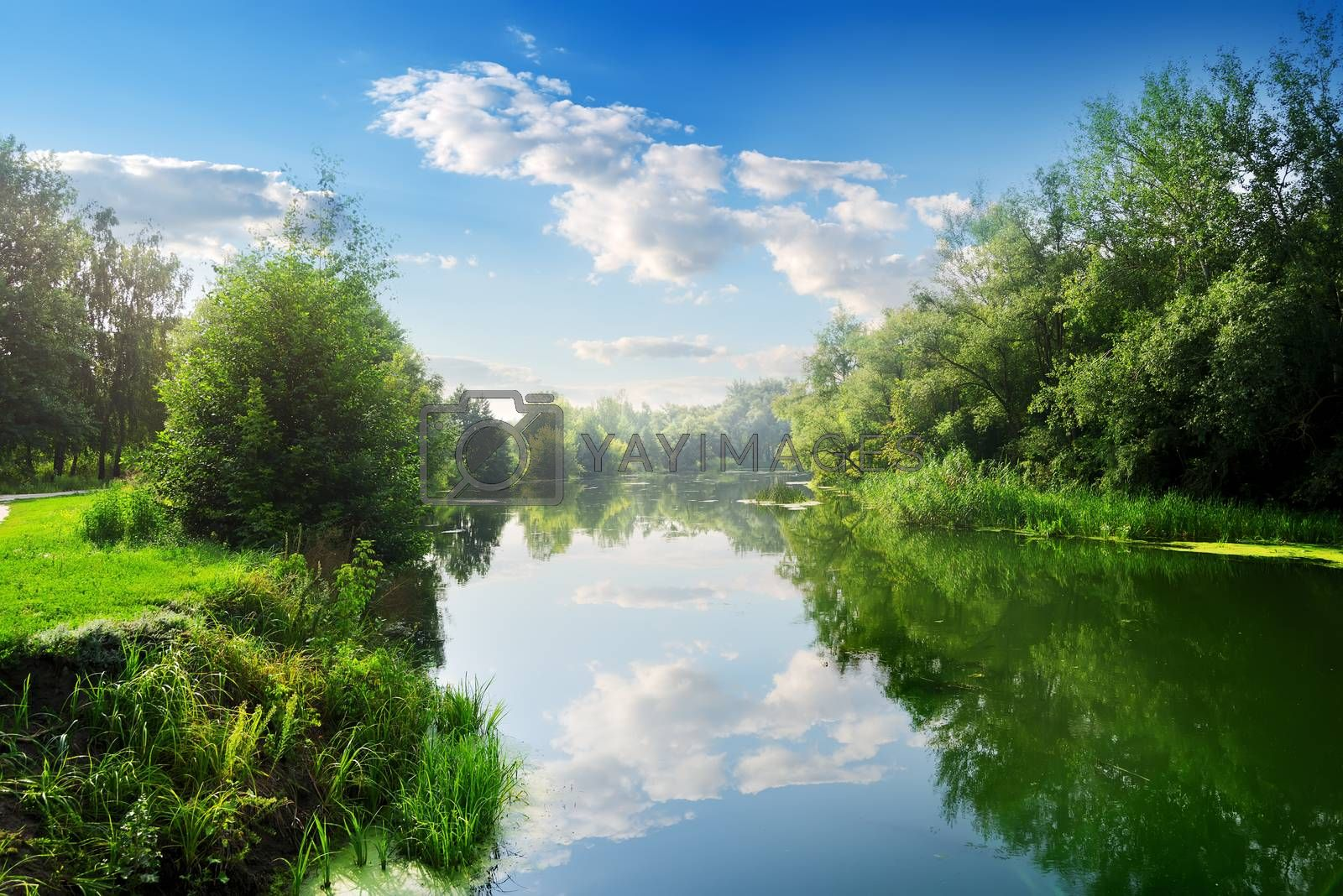 Beautiful river in the summer day