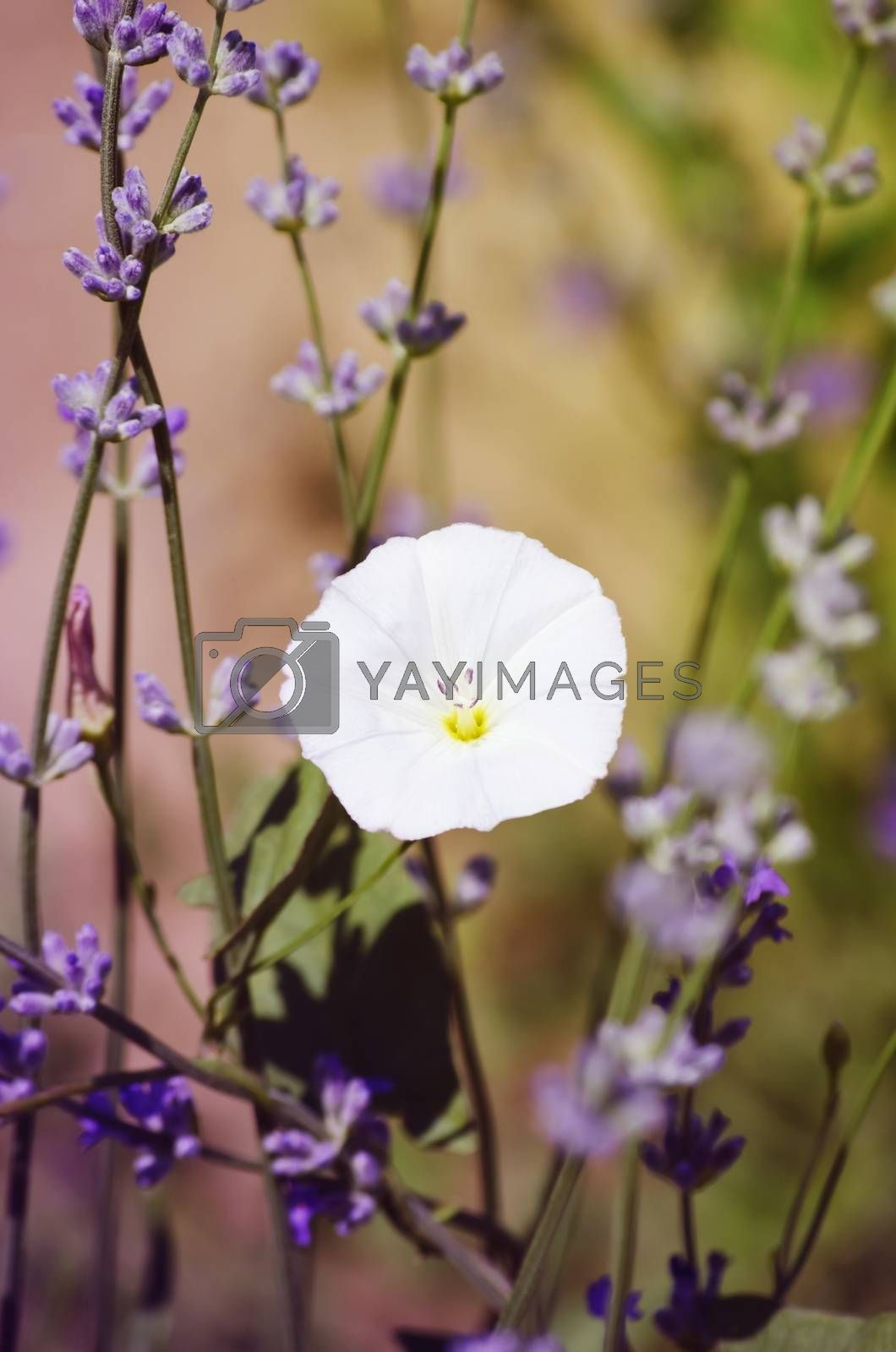 Photo of Spring or Summer Flower Over Natural Background
