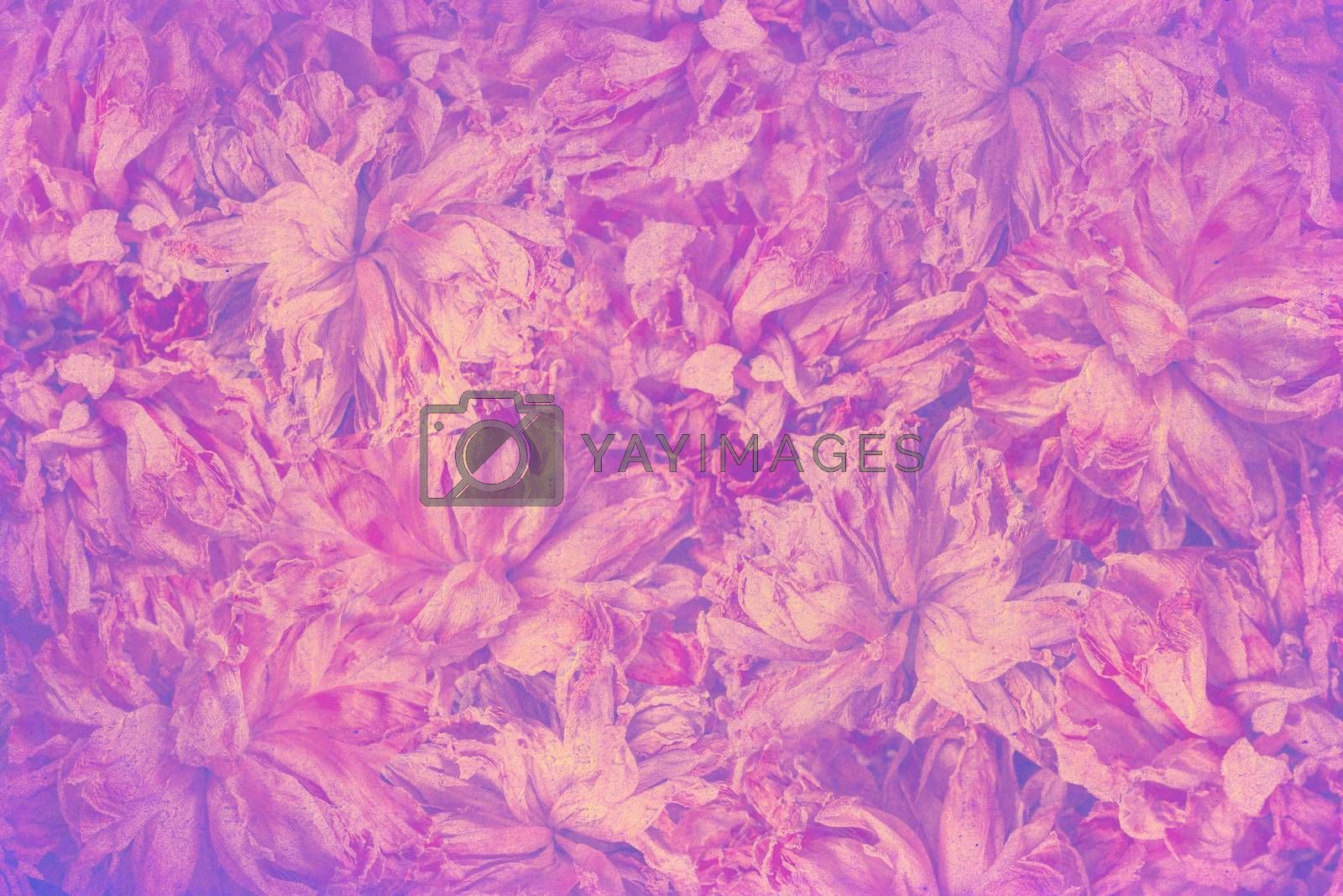 art floral vintage background with asters